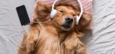 Bez sluchátek na uších si někteří z nás již nedokážou představit práci a dokonalé soustředění