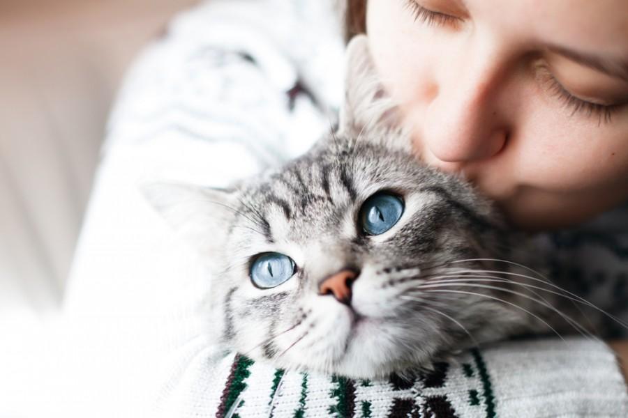 Kočka v náručí