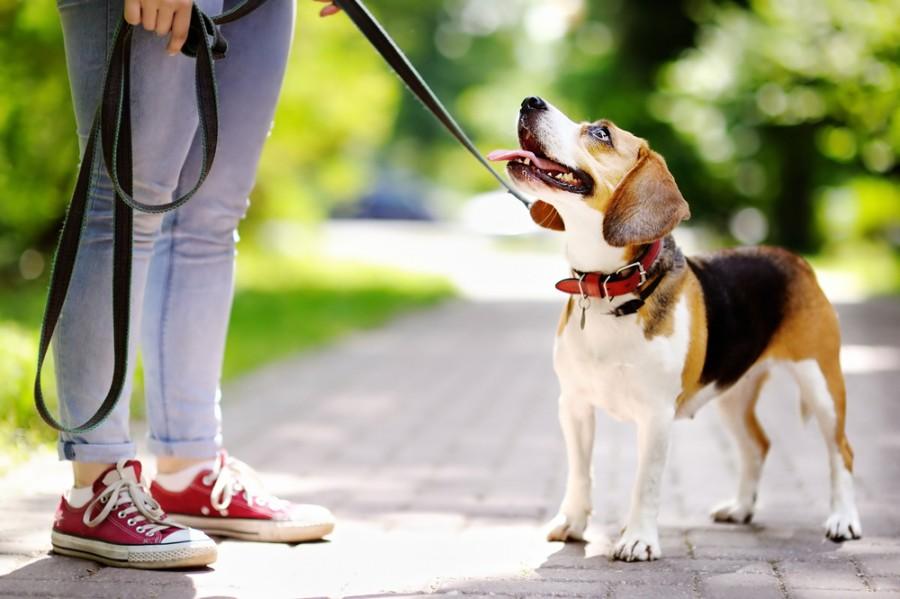 Život se psem