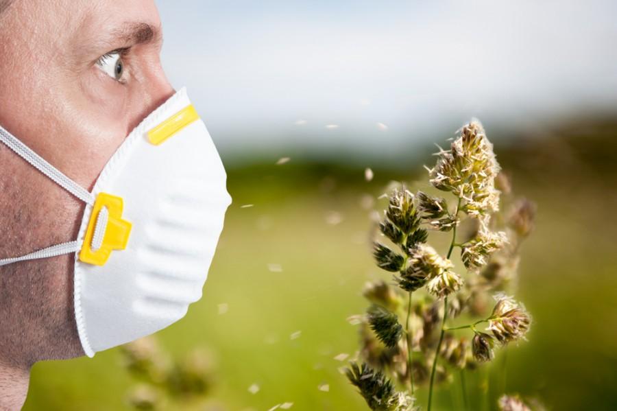 Alergie na pyly