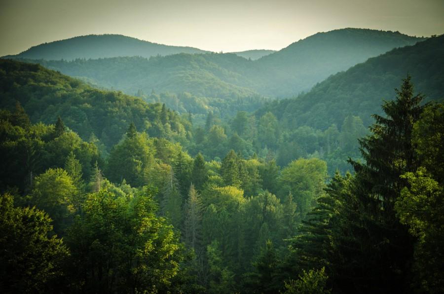 Správa lesů a myslivost
