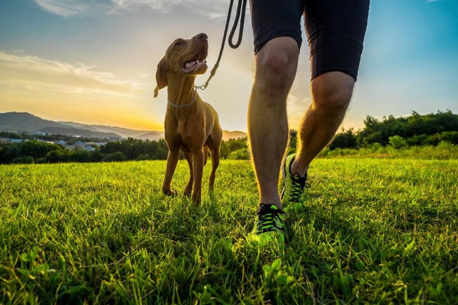 Běh se psem