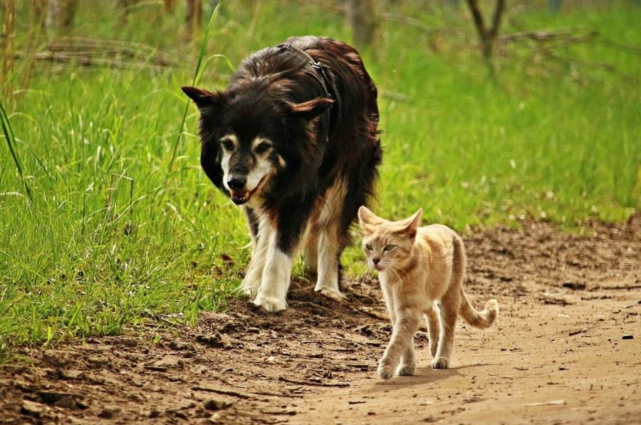 Nadační fond Pes v nouzi