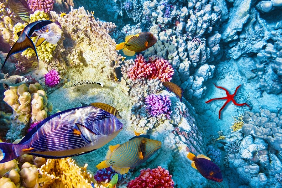 Exotické ryby