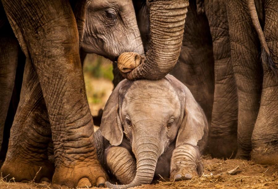 Sloní mládě