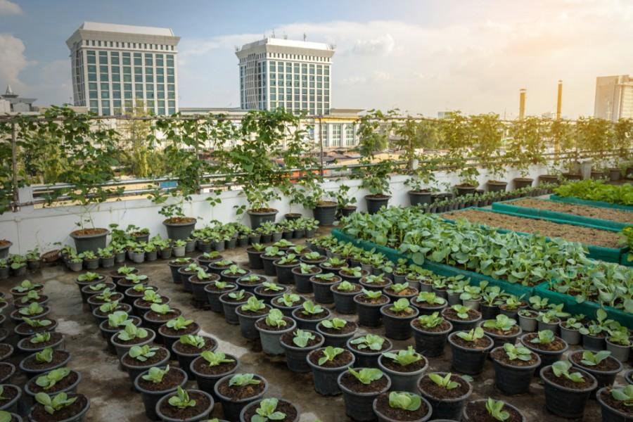 Zemědělství budoucnosti