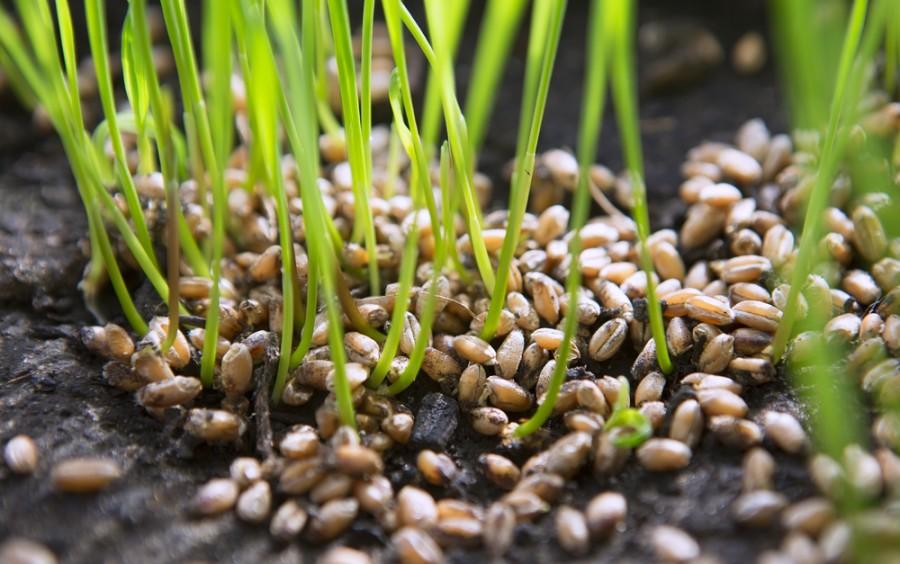 Semena ke klíčení