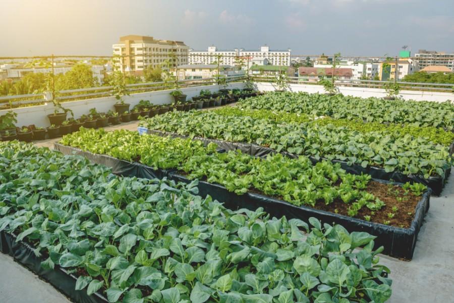Pěstování na střechách budov