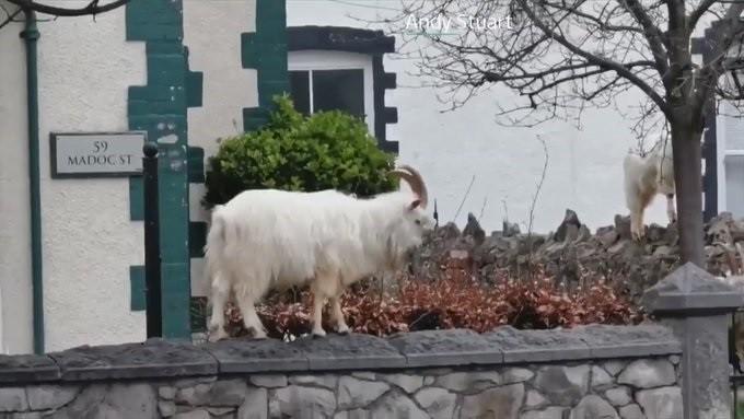 Kozy ve Walesu